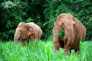 watching elephants in thailand