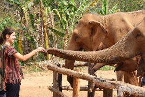 feeding_elephants