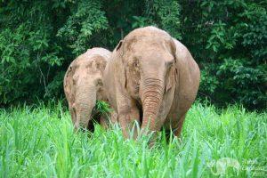 elephants grazing at Karen Elephant Serenity