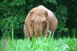 Elephant tour by Asian Elephant Projects