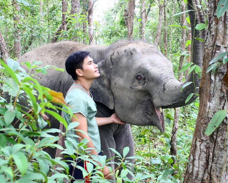Karen_Elephant_Habitat_