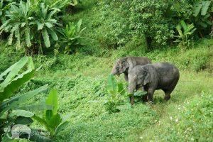 Pamper A Pachyderm Ethical Elephant Sanctuary
