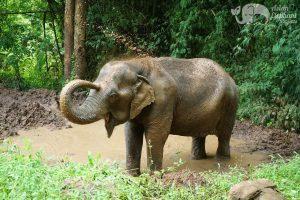 Pamper A Pachyderm elephant mudbath