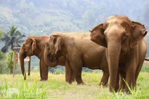Elephant Highlands