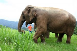 seeing elephants respectfully