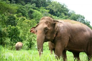 Ethical elephant sanctuary
