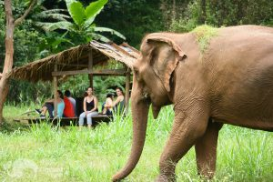 watching elephants graze at ethical elephant sanctuary