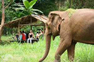 watching elephants graze at ethical elephant sanctuary