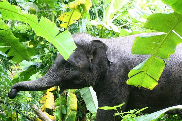 Elephant_Heaven