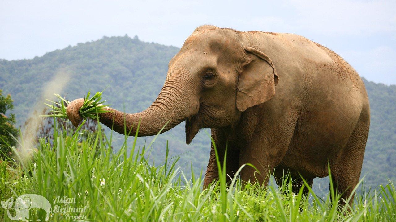 Elephant_Highlands