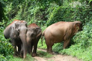 elephant herd at ethical elephant tour