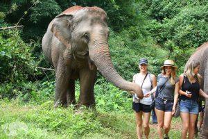feeding elephants Thailand