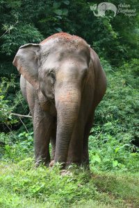 elephant jungle walk Thailand