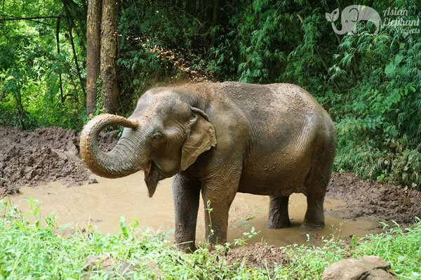 visiting elephants at ethical tour Thailand