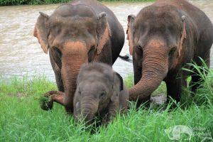 ethical elehants sanctuary