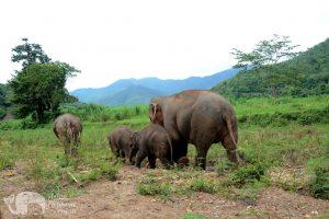 Elephant family at ethical elephant tour