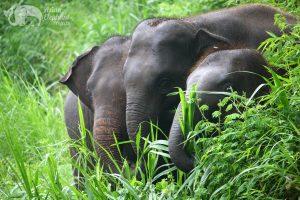 Elephant friends