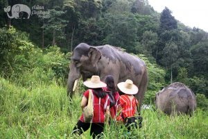 Observe elephants at ethical elephant sanctuary