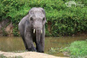 Young elephant at karen elephant retirement