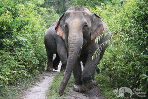 elephant sanctuay chiang mai