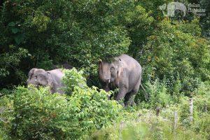 elephant sanctuay thailand