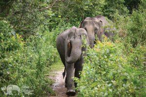 elephants at karen elephant reserve