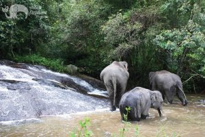 ethical elephant tour thailand