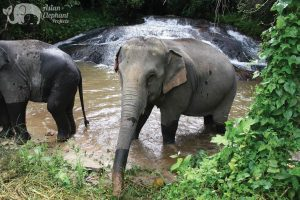 see elephants in chiang mai