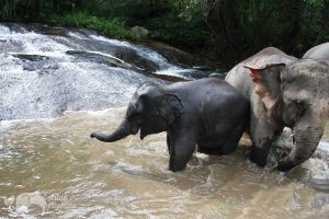 Karen Elephant Retirement by Elephant Nature Park
