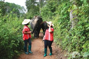 walking with elephants at ethical elephant tour