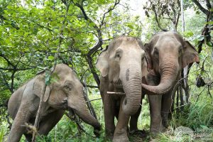elephant experience thailand