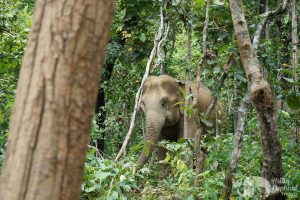 jungle elephant experience