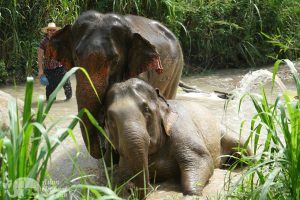 amazing elephant experience