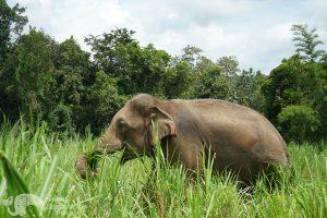 chiang mai elephant tour thailand
