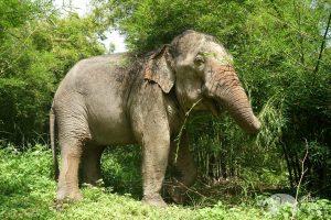 jungle elephant tour thailand