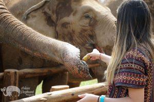 thailand elephant feeding