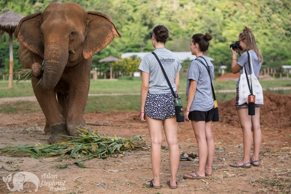 volunteer elephant nature park