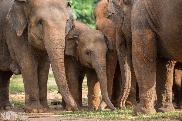 elephant sanctuary chiang mai