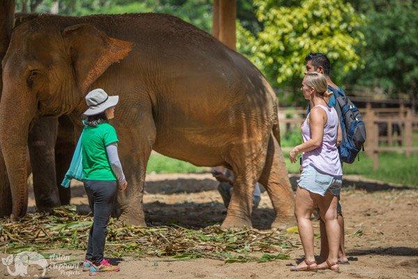 Elephant_Nature_Park_Chiang_Mai