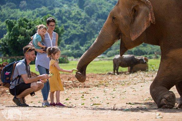 elephant sanctuary thailand ENP