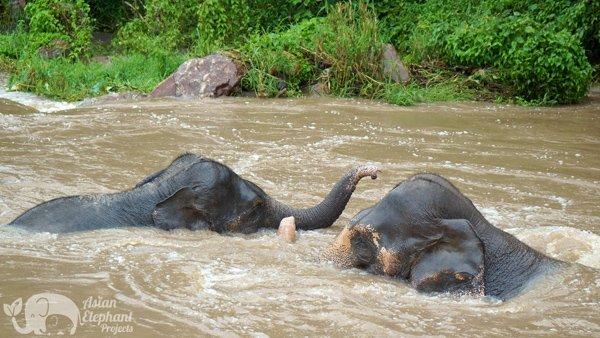 Karen Elephant Oasis Elephant Sanctuary