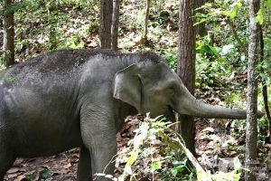 thailand tour with elephants