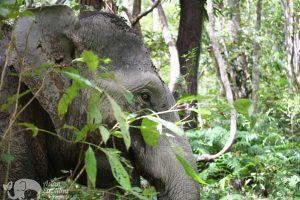 forest elephant thailand elephant tour