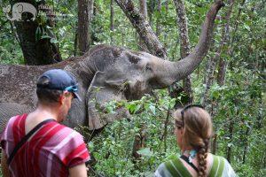 elephant experience chiang mai thailand