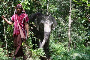 Karen mahout at Karen Elephant Oasis
