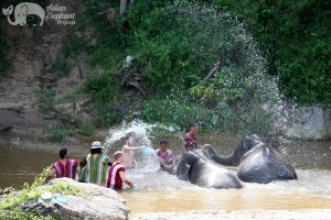 bathing elephants thailand