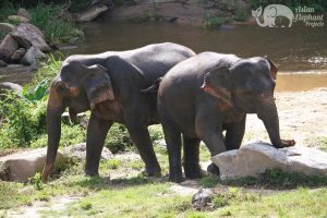 Elephant tour in Chiang Mai