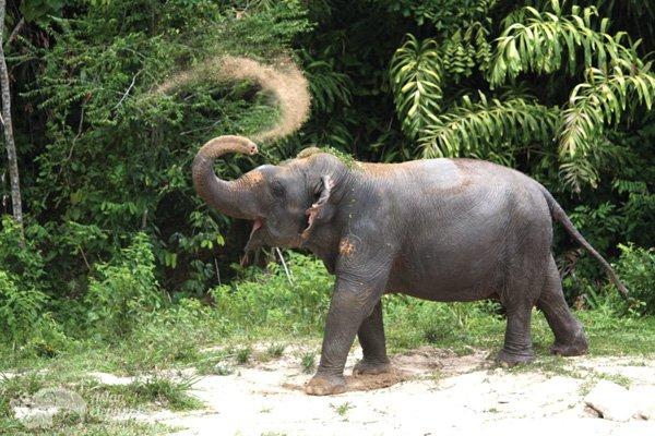 Pkuket_Elephant_Park