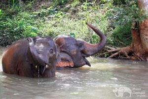 elephants bathe in the river at elephant tour