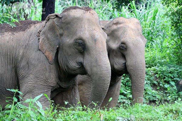 Elephant Delight elephant tour
